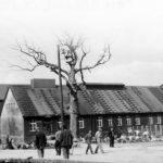 Buchenwald, tras la liberación, con los restos del roble de Goethe